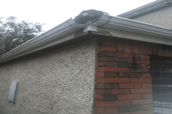 Gutter Replacement in Cork corkcityroofing.com